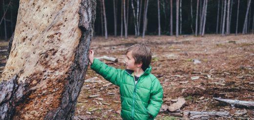 lesni skolky